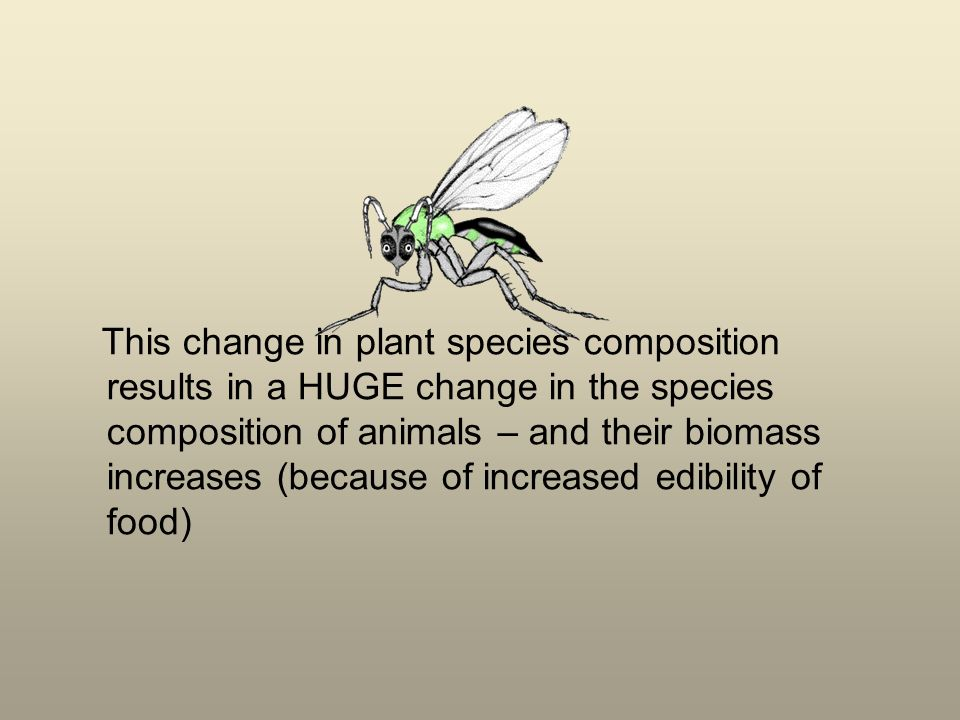 This change in plant species composition results in a HUGE change in the species composition of animals – and their biomass increases (because of incr