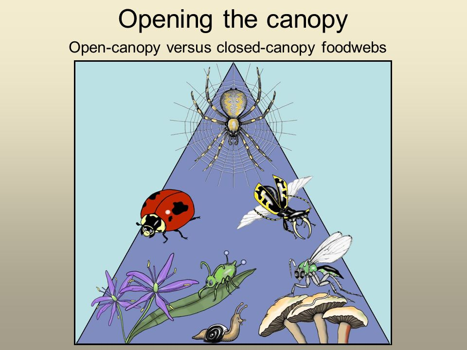 Opening the canopy Open-canopy versus closed-canopy foodwebs