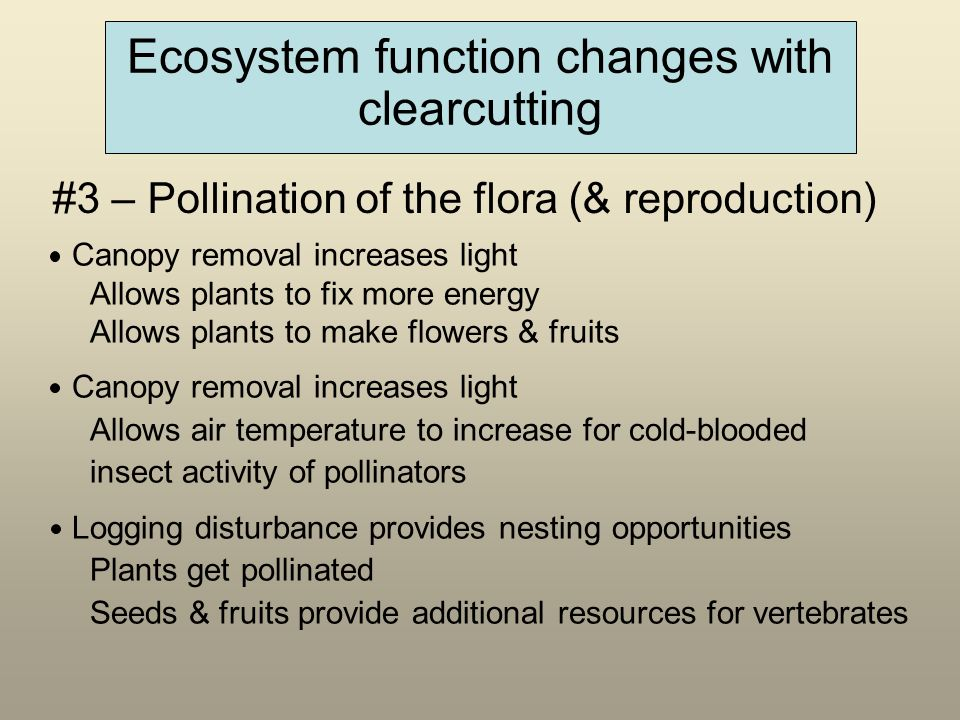 Ecosystem function changes with clearcutting Canopy removal increases light Allows plants to fix more energy Allows plants to make flowers & fruits Canopy removal increases light Allows air temperature to increase for cold-blooded insect activity of pollinators Logging disturbance provides nesting opportunities Plants get pollinated Seeds & fruits provide additional resources for vertebrates #3 – Pollination of the flora (& reproduction)