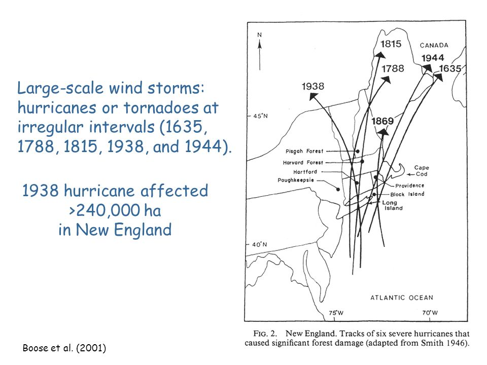 Small-scale wind storms: kill one to several trees. In eastern U. S., 0.2- 2%/year of all forests are affected by wind throw. At any time, 5-50% of a