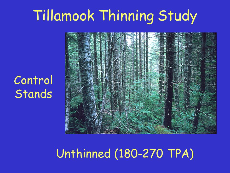 Moderate Thinning Treatment Thinned to roughly 100-130 TPA Similar to standard operational thin Tillamook Thinning Study
