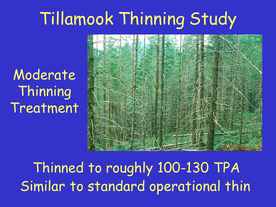 Summary (Townsends Chipmunks) Densities of were higher in heavily thinned stands compared to controls.