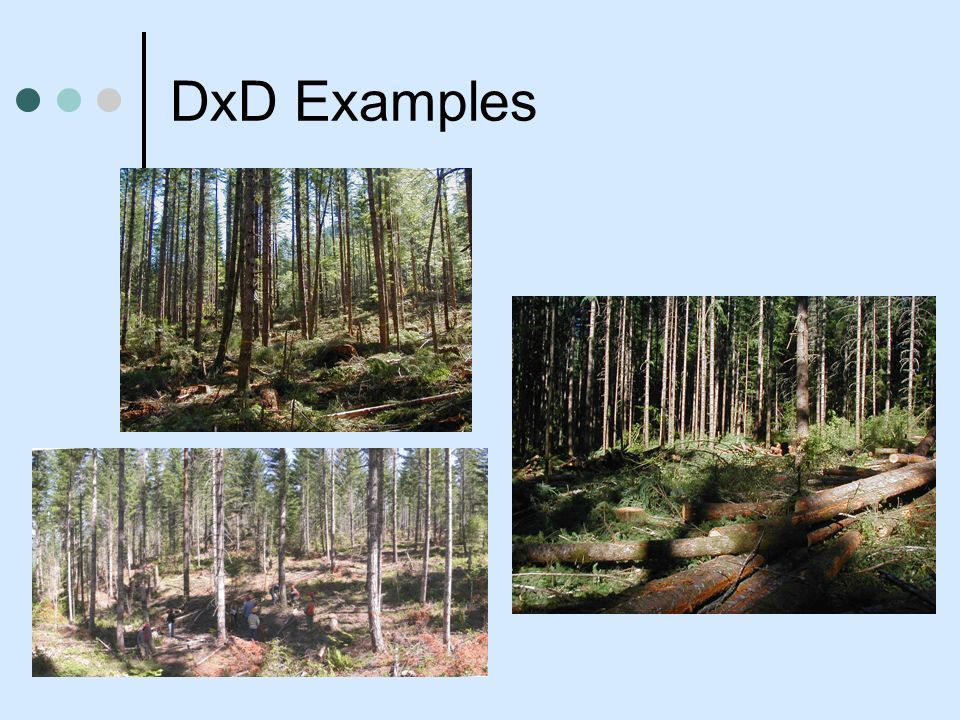 DxD Examples