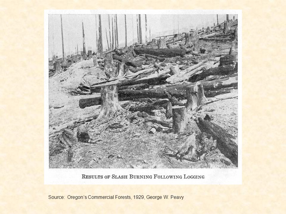 Source: Oregons Commercial Forests, 1929, George W. Peavy