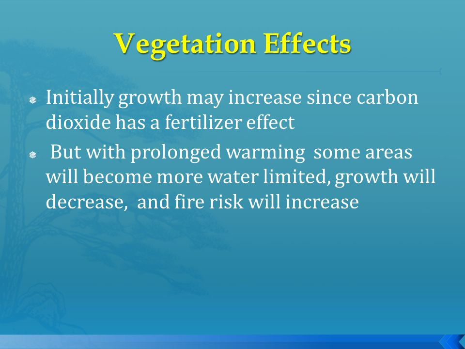 Initially growth may increase since carbon dioxide has a fertilizer effect But with prolonged warming some areas will become more water limited, growt