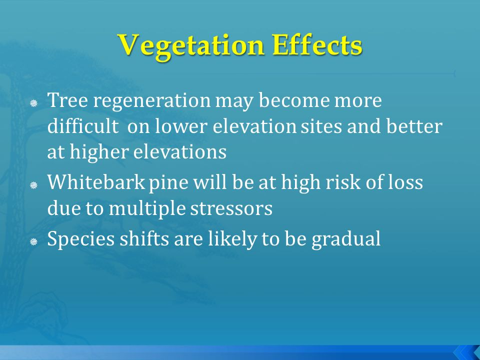 Tree regeneration may become more difficult on lower elevation sites and better at higher elevations Whitebark pine will be at high risk of loss due t