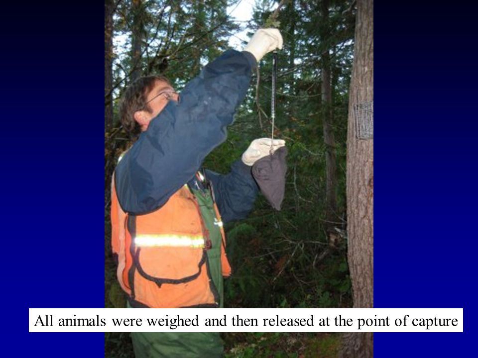 All animals were weighed and then released at the point of capture