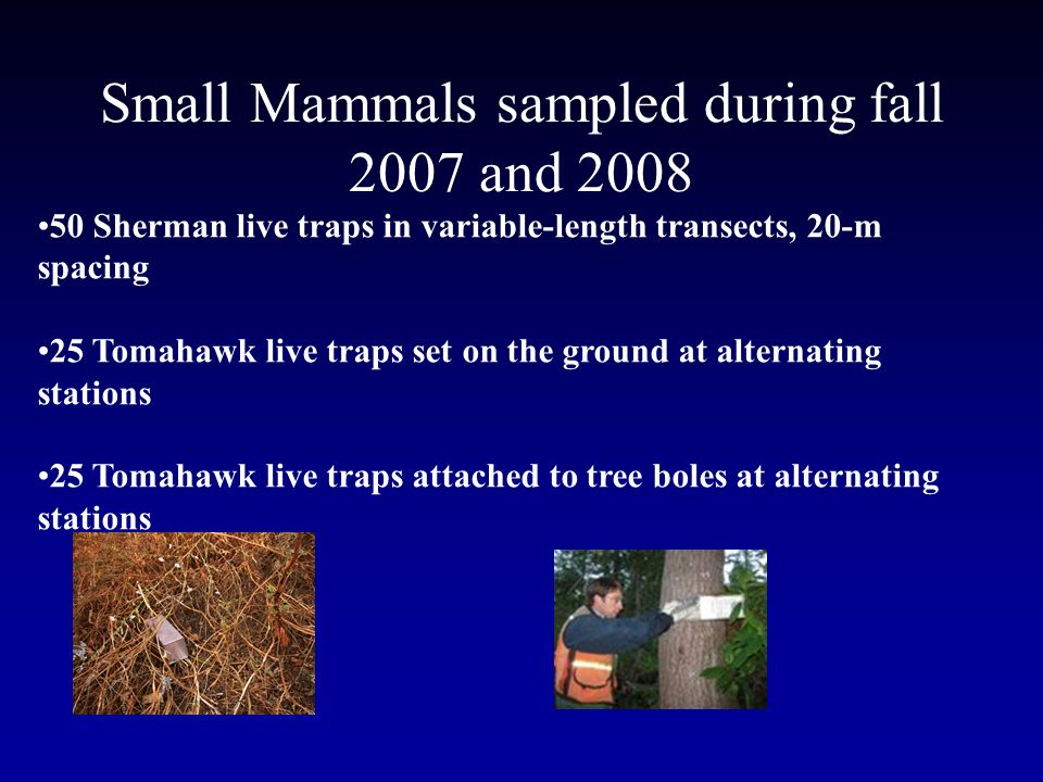Small Mammals sampled during fall 2007 and 2008 50 Sherman live traps in variable-length transects, 20-m spacing 25 Tomahawk live traps set on the ground at alternating stations 25 Tomahawk live traps attached to tree boles at alternating stations