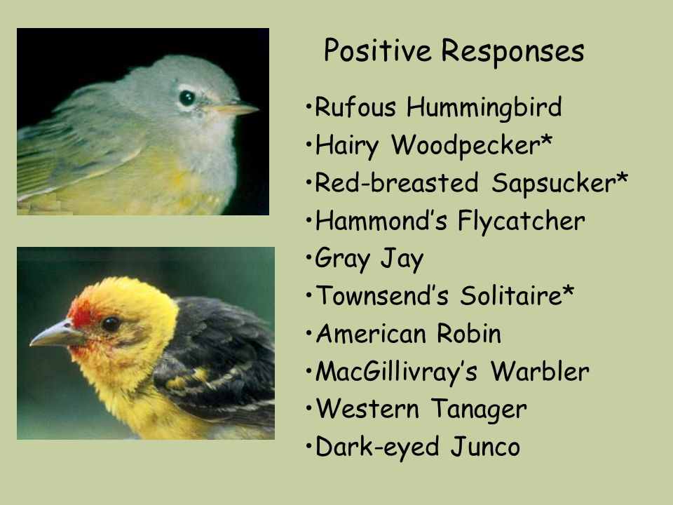 Positive Responses Rufous Hummingbird Hairy Woodpecker* Red-breasted Sapsucker* Hammonds Flycatcher Gray Jay Townsends Solitaire* American Robin MacGillivrays Warbler Western Tanager Dark-eyed Junco