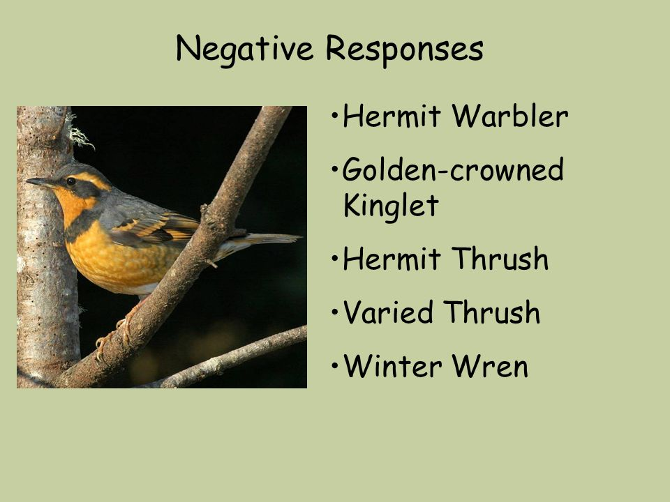 Negative Responses Hermit Warbler Golden-crowned Kinglet Hermit Thrush Varied Thrush Winter Wren
