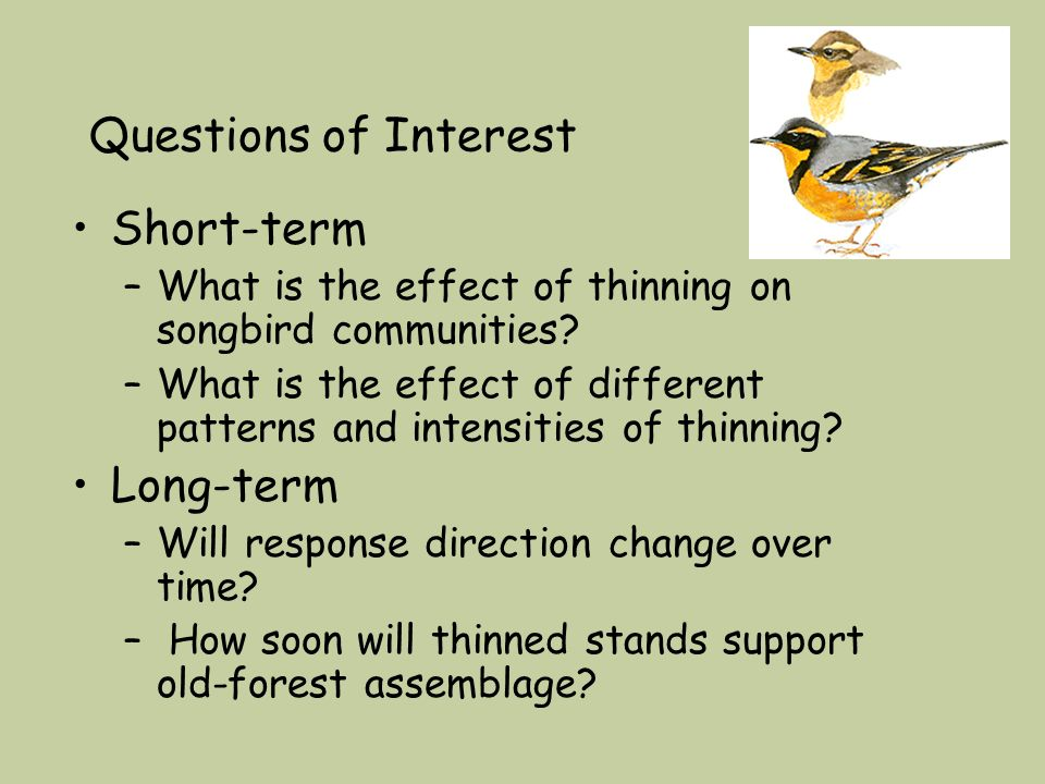 Questions of Interest Short-term –What is the effect of thinning on songbird communities.