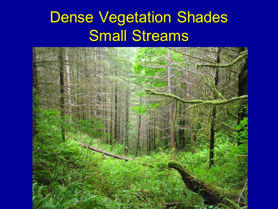 Dense Vegetation Shades Small Streams