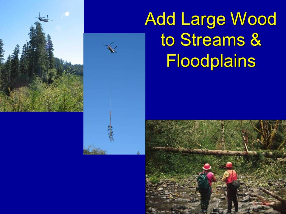 Add Large Wood to Streams & Floodplains