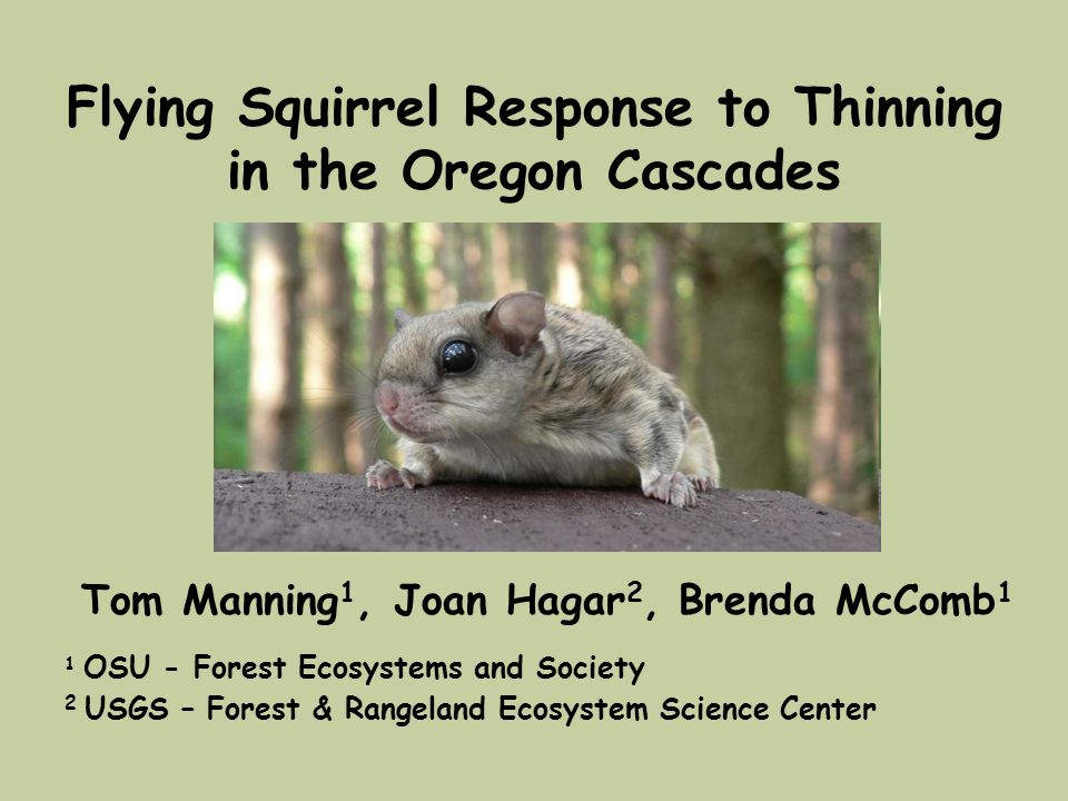 Flying Squirrel Response to Thinning in the Oregon Cascades Tom Manning 1, Joan Hagar 2, Brenda McComb 1 1 OSU - Forest Ecosystems and Society 2 USGS
