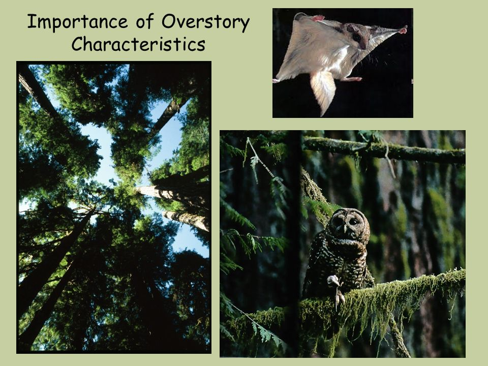 Importance of Overstory Characteristics