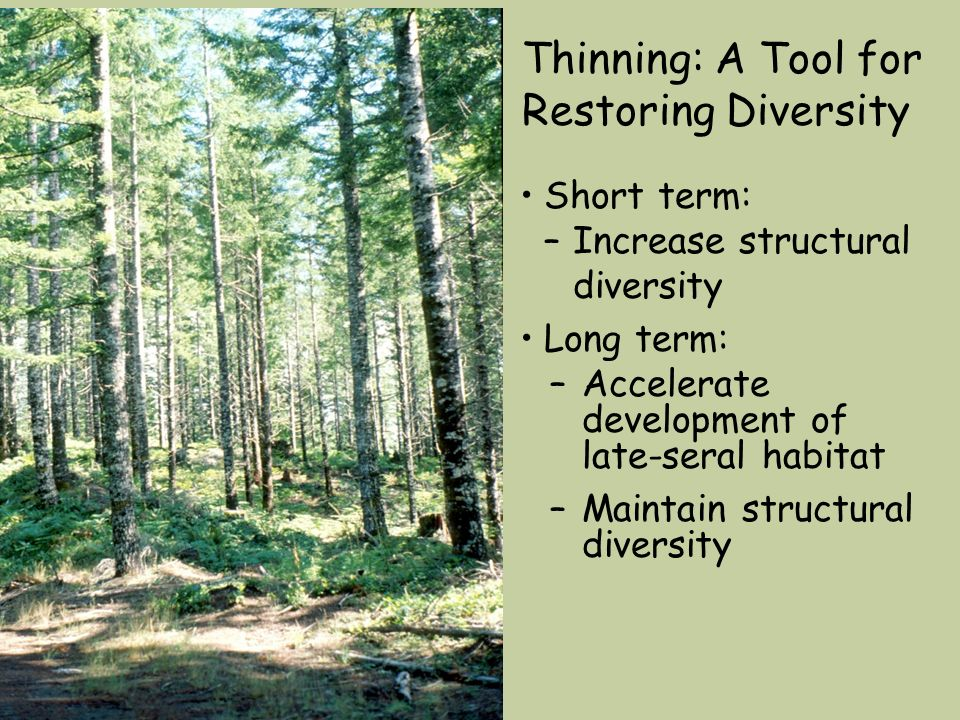 Thinning: A Tool for Restoring Diversity Short term: –Increase structural diversity Long term: –Accelerate development of late-seral habitat –Maintain