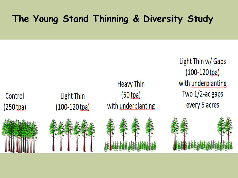 The Young Stand Thinning & Diversity Study