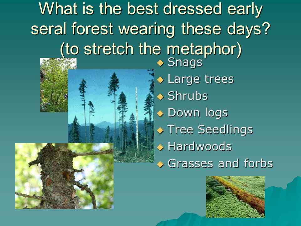 Side-bar: WHAT DID I GOOGLE TO FIND PHOTOS OF COMPONENTS OF HIGH QUALITY EARLY SERAL FOREST .