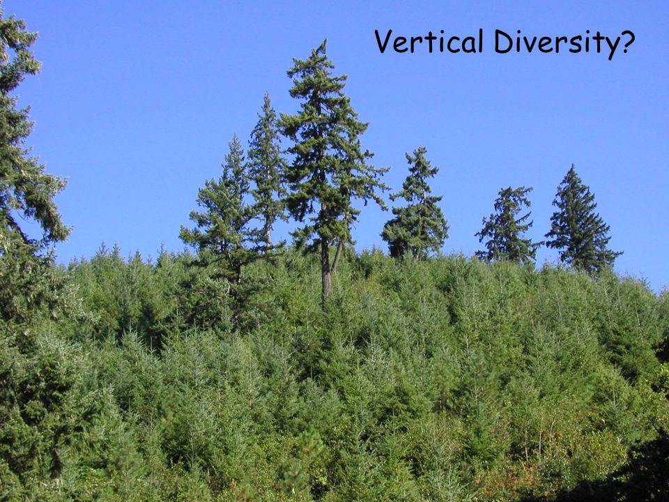 Vertical Diversity?