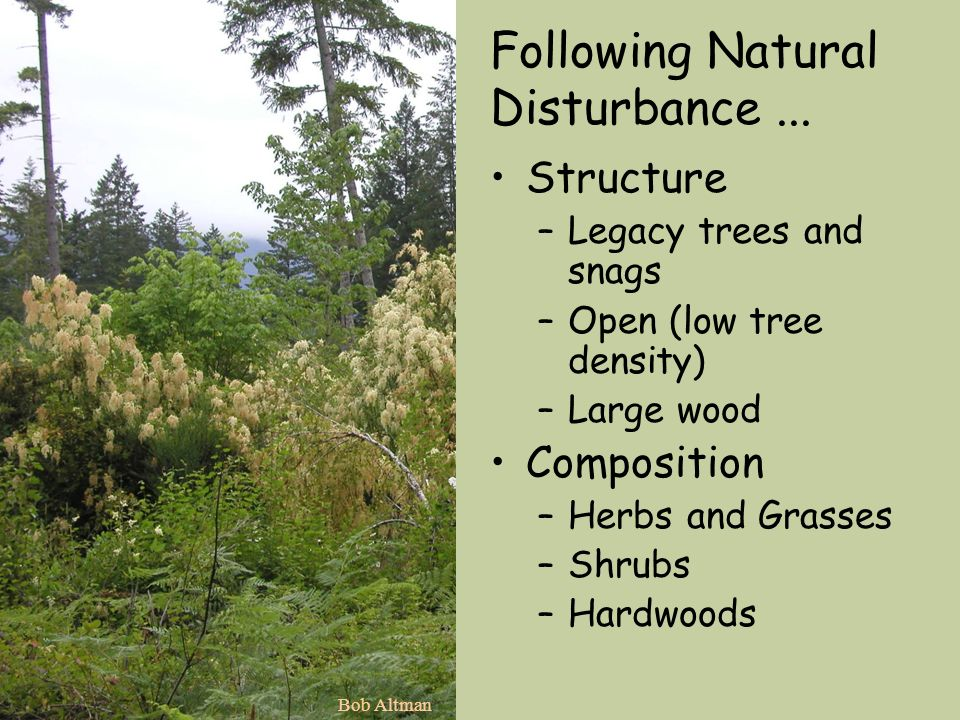 Following Natural Disturbance... Structure –Legacy trees and snags –Open (low tree density) –Large wood Composition –Herbs and Grasses –Shrubs –Hardwo