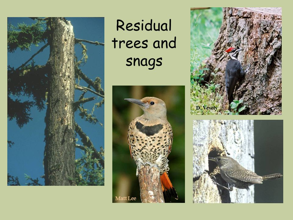 Residual trees and snags Matt Lee D. Vesely