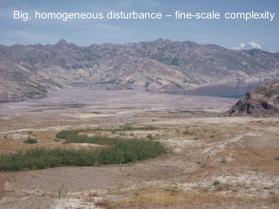 Big, homogeneous disturbance – fine-scale complexity