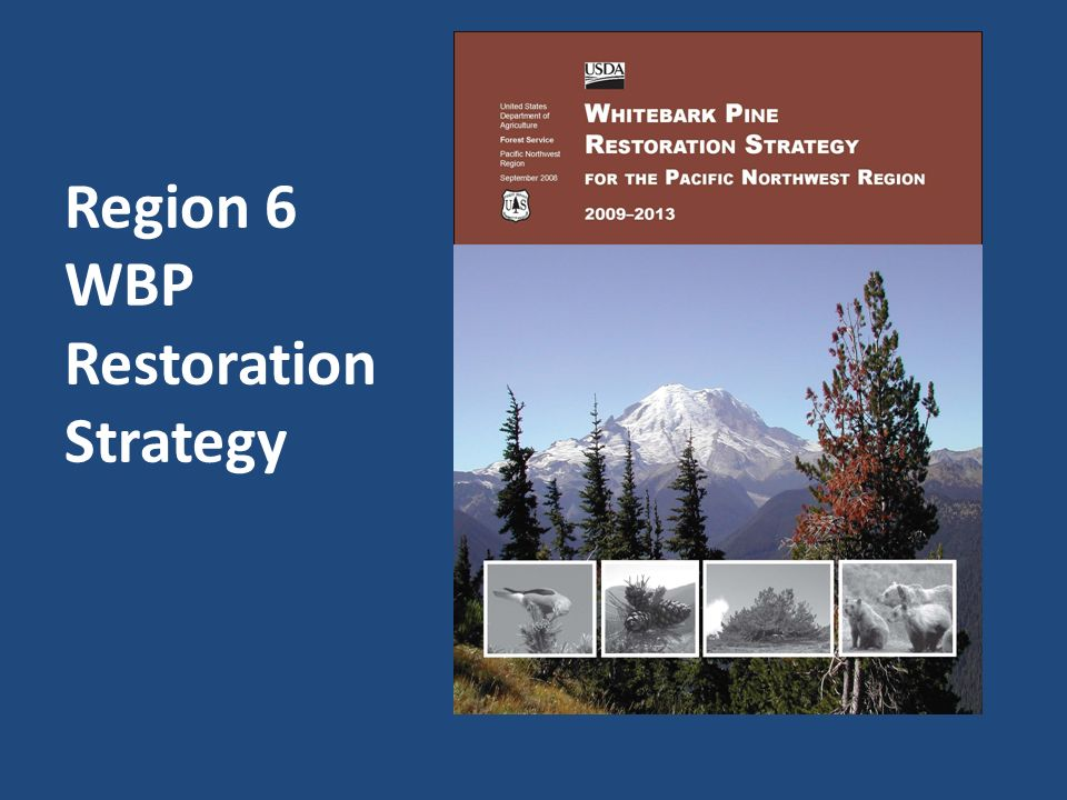 Region 6 WBP Restoration Strategy