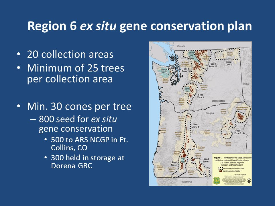 Region 6 ex situ gene conservation plan 20 collection areas Minimum of 25 trees per collection area Min. 30 cones per tree – 800 seed for ex situ gene