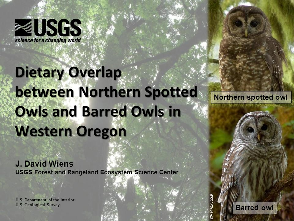 Nighttime Habitat Selection Both species most often foraged in patches of old (>120 yrs old) conifer forest or riparian areas containing large hardwood trees Barred owls used available forest types more evenly than spotted owls Overlap in use of primary forest types = 81% (range = 30 – 99%) 5,809 nighttime foraging locations BO NSO YoungMatureOldHardwood