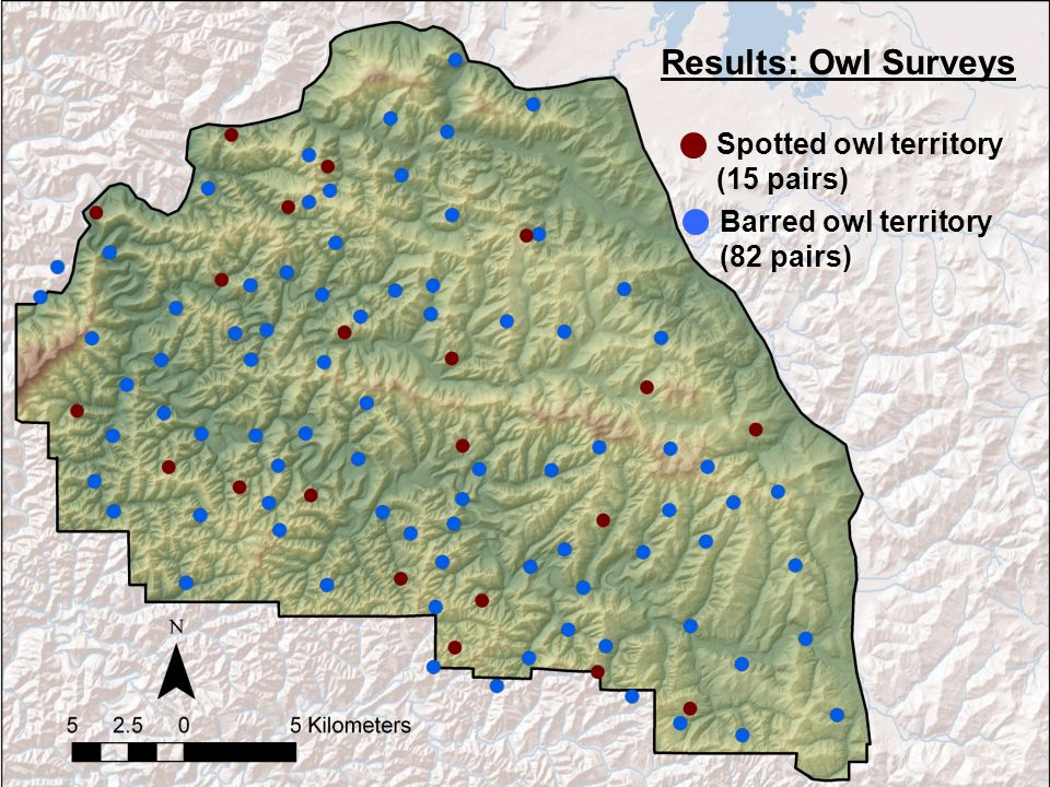 Barred owl territory (82 pairs) Spotted owl territory (15 pairs) Results: Owl Surveys
