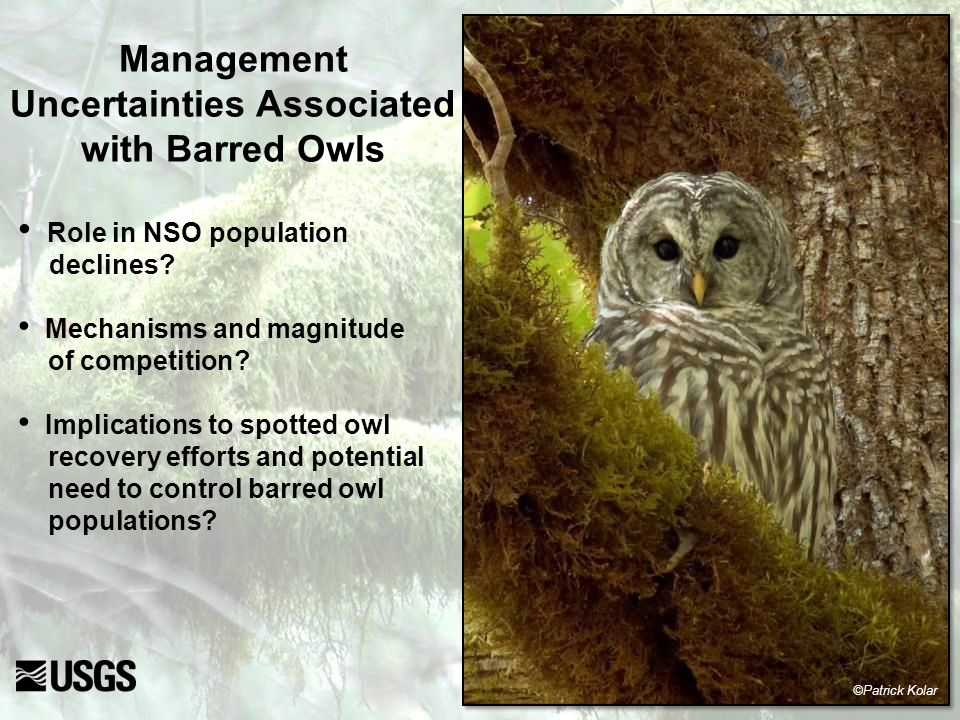 1)What is the degree of resource partitioning between spotted owls and barred owls where they now co-occur.