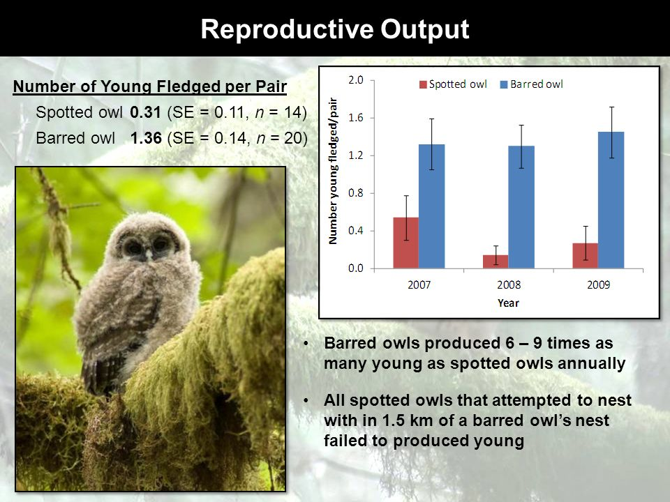 Reproductive Output Number of Young Fledged per Pair Spotted owl0.31 (SE = 0.11, n = 14) Barred owl 1.36 (SE = 0.14, n = 20) Barred owls produced 6 –