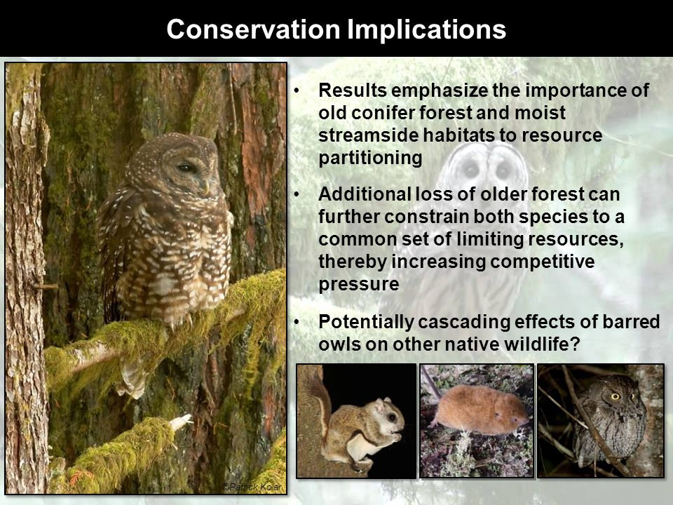 Conservation Implications Results emphasize the importance of old conifer forest and moist streamside habitats to resource partitioning Additional los