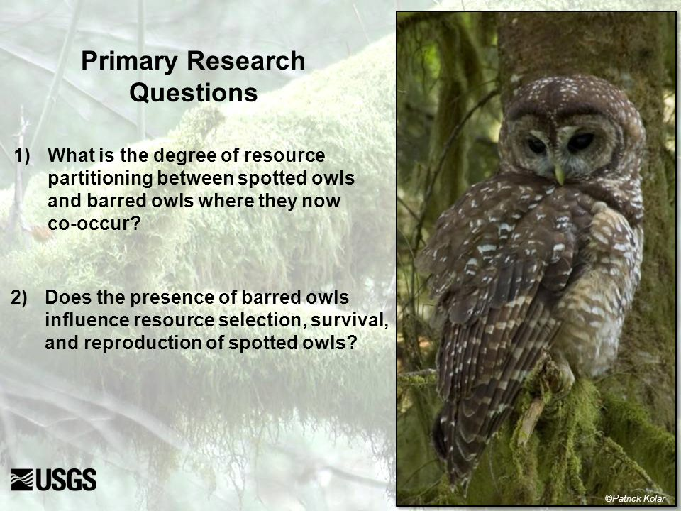 Conservation Implications Results emphasize the importance of old conifer forest and moist streamside habitats to resource partitioning Additional loss of older forest can further constrain both species to a common set of limiting resources, thereby increasing competitive pressure ©Patrick Kolar Potentially cascading effects of barred owls on other native wildlife?