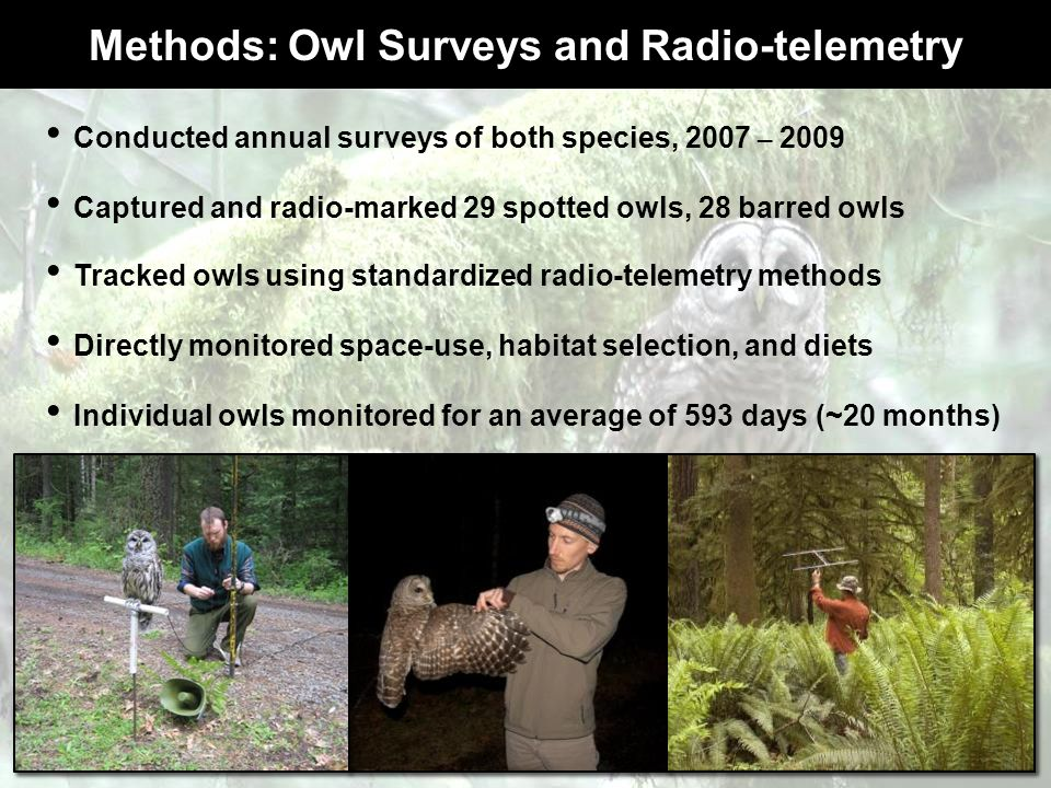 Methods: Owl Surveys and Radio-telemetry Conducted annual surveys of both species, 2007 – 2009 Captured and radio-marked 29 spotted owls, 28 barred ow