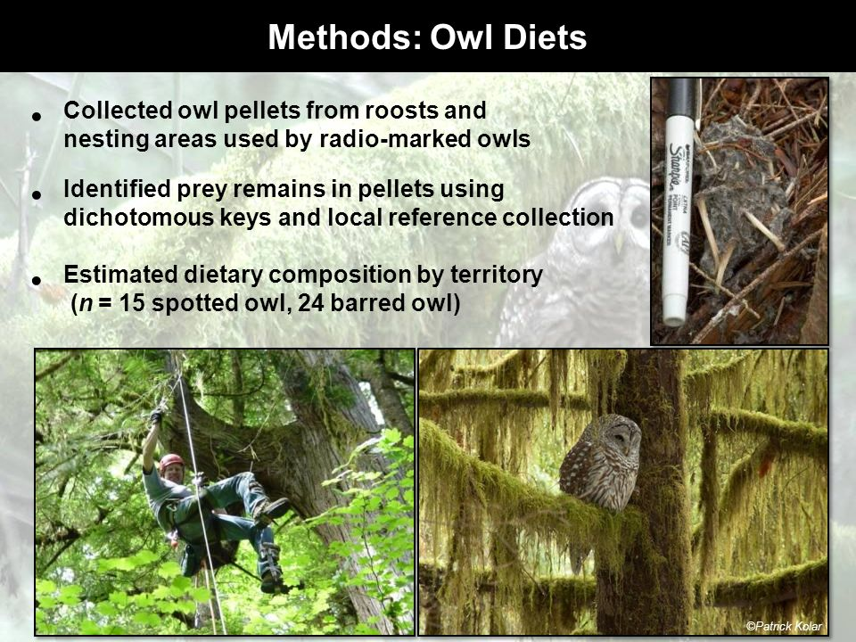 Methods: Owl Diets Collected owl pellets from roosts and nesting areas used by radio-marked owls Estimated dietary composition by territory (n = 15 sp