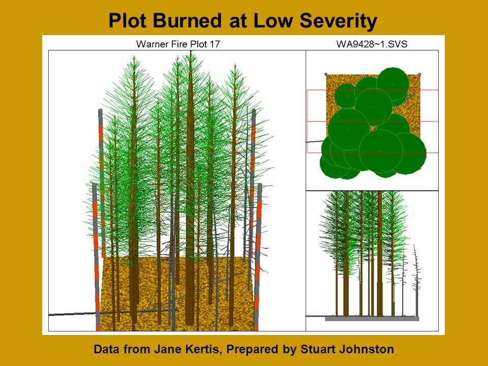 Data from Jane Kertis, Prepared by Stuart Johnston Plot Burned at Low Severity
