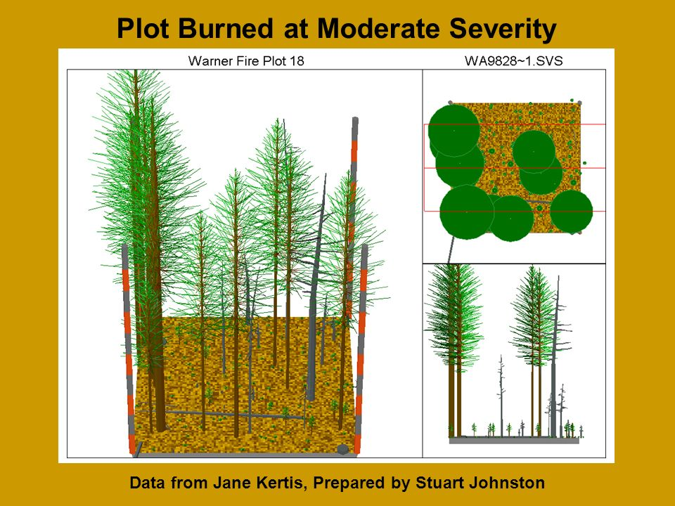 Data from Jane Kertis, Prepared by Stuart Johnston Plot Burned at Moderate Severity