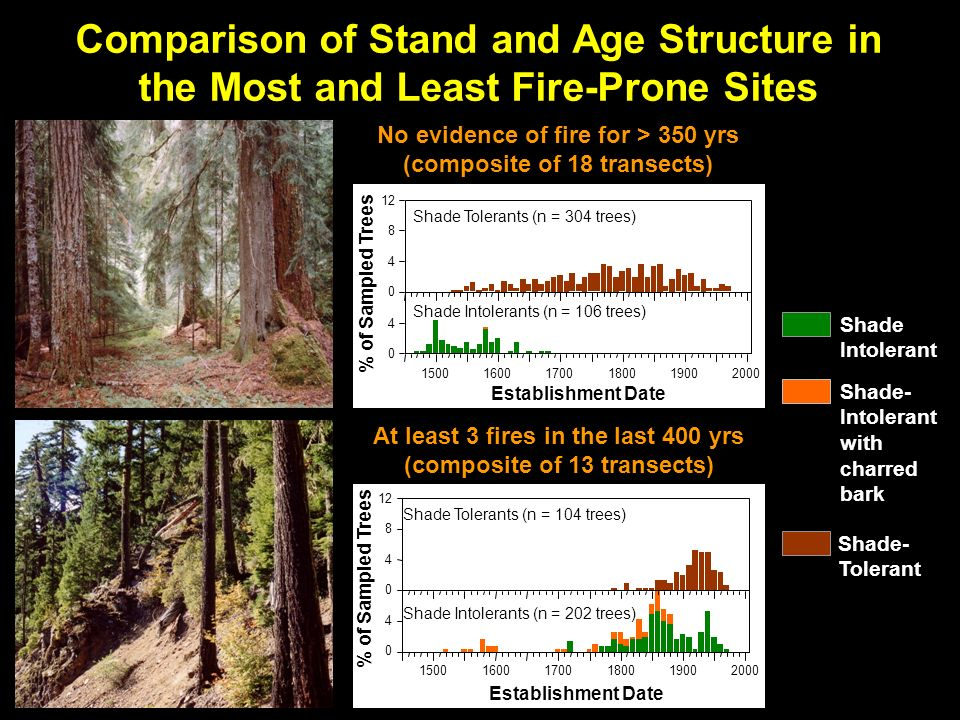 % of Sampled Trees Shade Tolerants (n = 304 trees) Shade Intolerants (n = 106 trees) Establishment Date No evidence of fire for > 350 yrs (composite of 18 transects) % of Sampled Trees Establishment Date Shade Tolerants (n = 104 trees) Shade Intolerants (n = 202 trees) At least 3 fires in the last 400 yrs (composite of 13 transects) Shade- Tolerant Shade Intolerant Shade- Intolerant with charred bark Comparison of Stand and Age Structure in the Most and Least Fire-Prone Sites