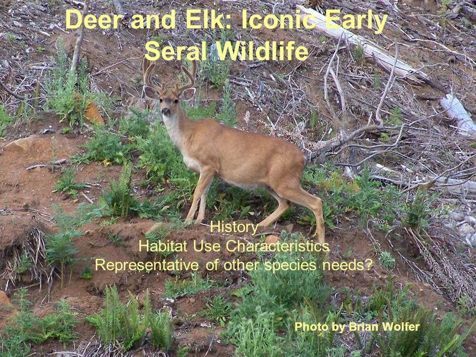 Deer and Elk: Iconic Early Seral Wildlife History Habitat Use Characteristics Representative of other species needs.