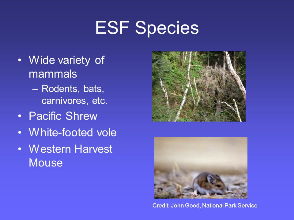 ESF Species Wide variety of mammals –Rodents, bats, carnivores, etc.