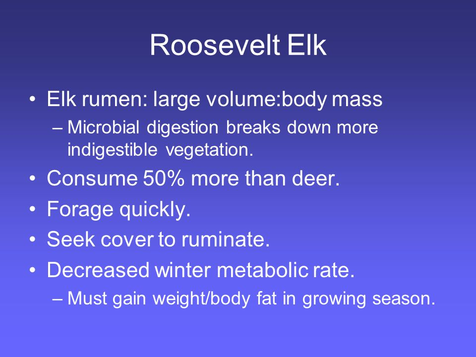 Roosevelt Elk Elk rumen: large volume:body mass –Microbial digestion breaks down more indigestible vegetation.