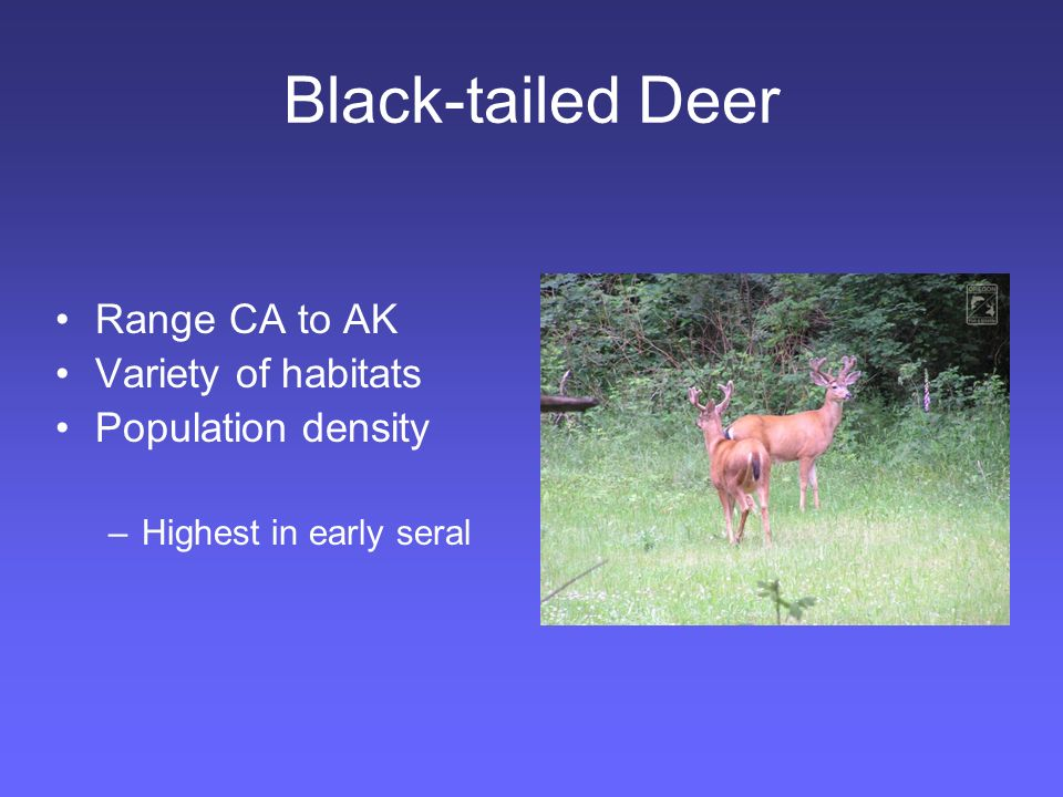Black-tailed Deer Deer rumen: less volume:body mass –Microbial digestion relatively short time –High quality diet requirement: Digestible Nutritious Forage quickly Seek cover to ruminate Decreased winter metabolic rate –Must gain weight/body fat in growing season.