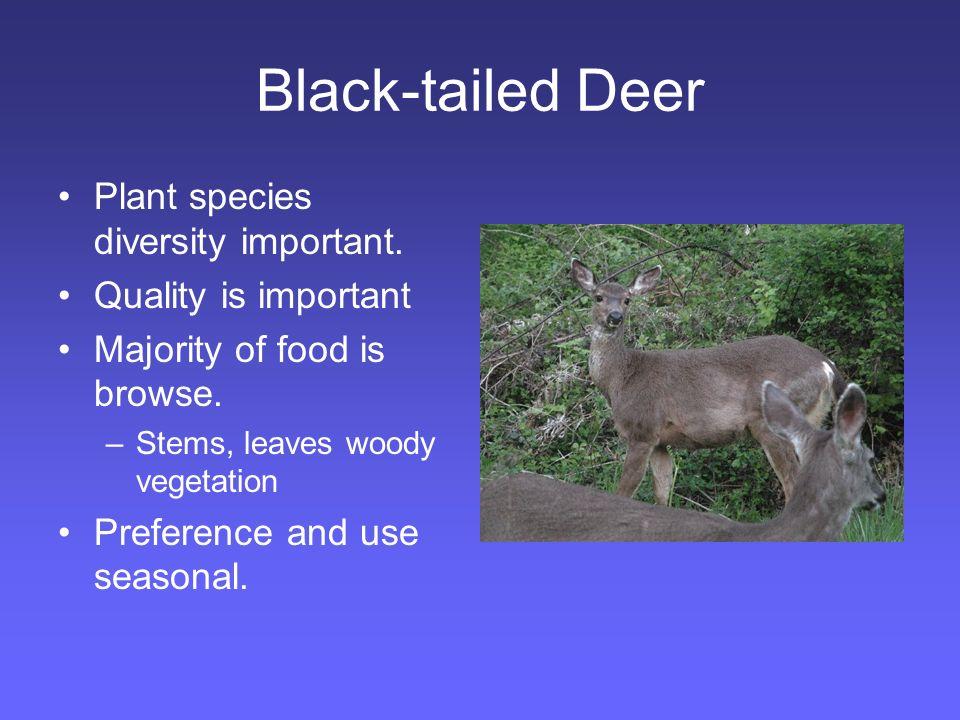 Black-tailed Deer Important foods: –Trailing blackberry –Vine maple –Huckleberry –Grasses (green) –Red Alder –Ocean spray –Madrone –Oak (acorns) –herbs