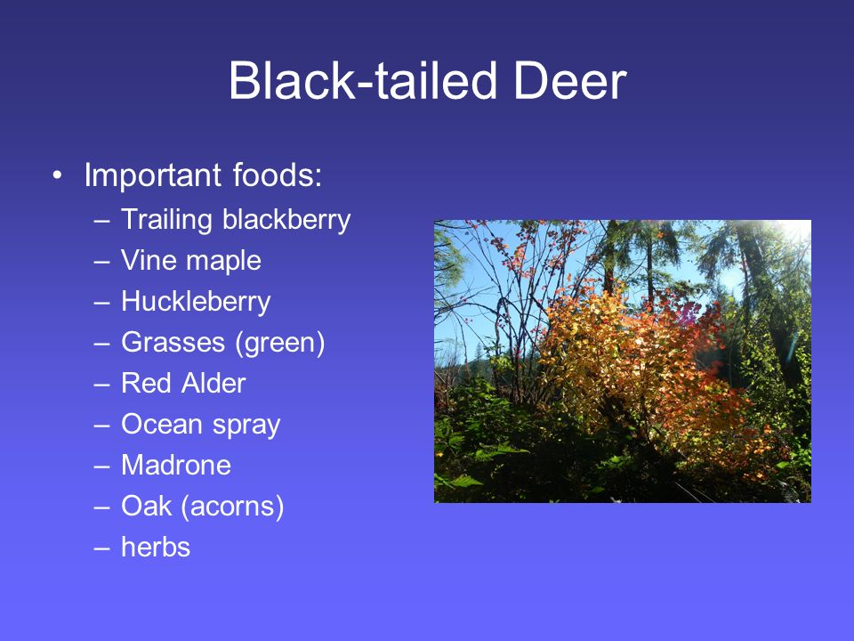 Black-tailed Deer Non-native plants Native increasers Non fire managed early seral