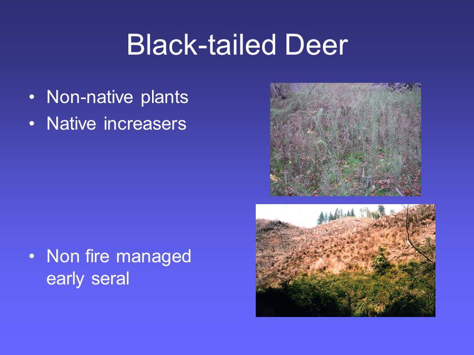Elk Roosevelt elk Cascades west.