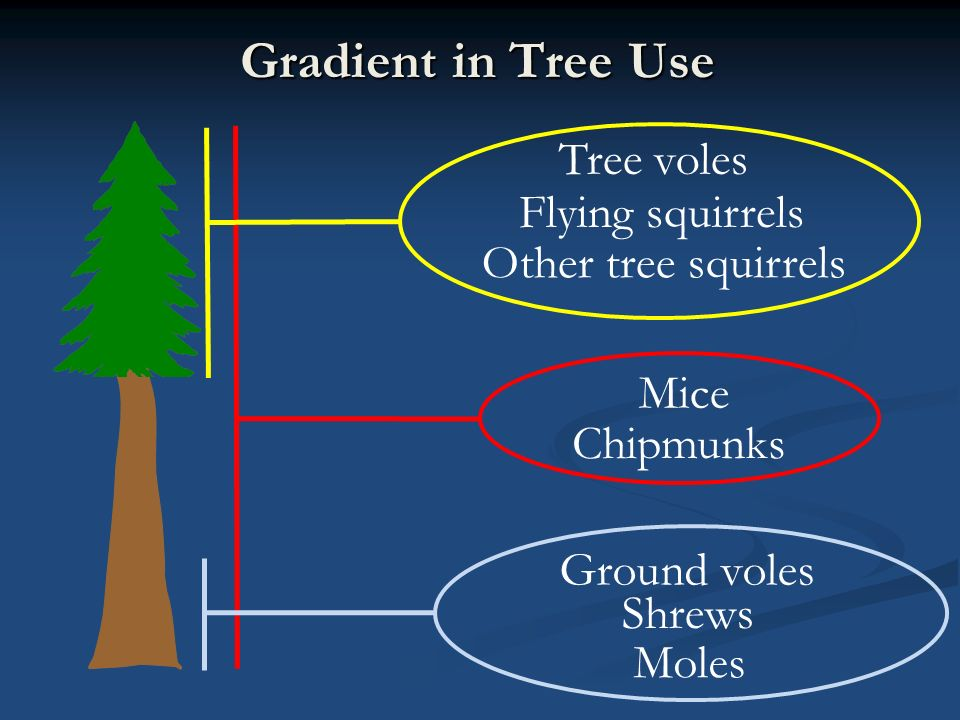 Gradient in Tree Use Ground voles Shrews Moles Tree voles Flying squirrels Other tree squirrels Mice Chipmunks