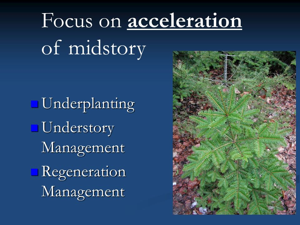 Focus on acceleration of midstory Underplanting Underplanting Understory Management Understory Management Regeneration Management Regeneration Management