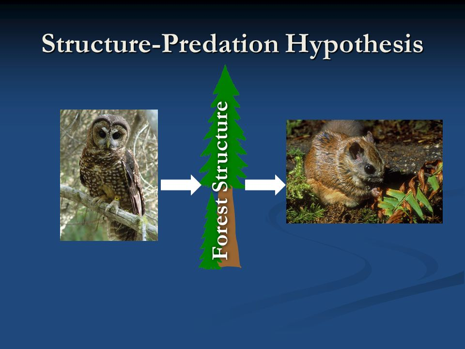 Structure-Predation Hypothesis Forest Structure
