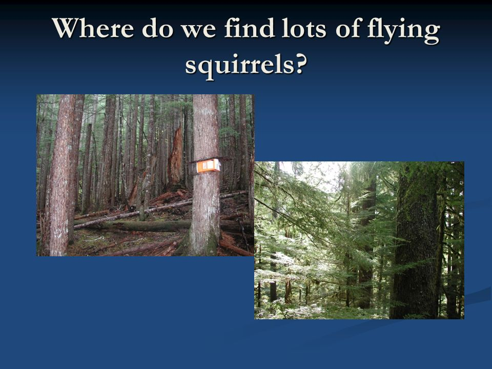 Where do we find lots of flying squirrels?